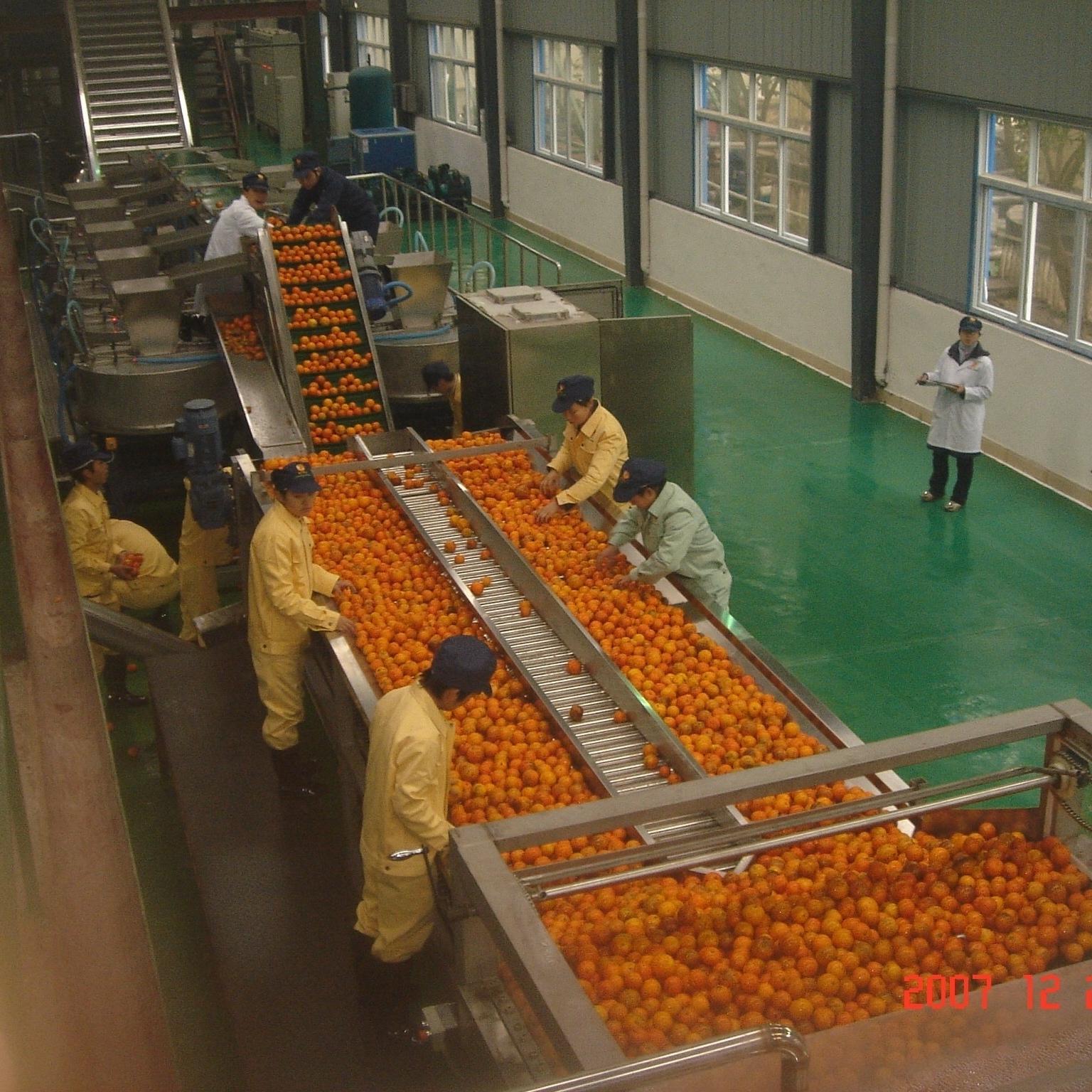 金橘果酒生产线