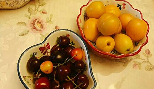 杏子采摘忙 深加工有效提升果品增值空间