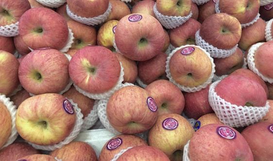 早熟蘋果陸續上市 果農如何實現收益增長?