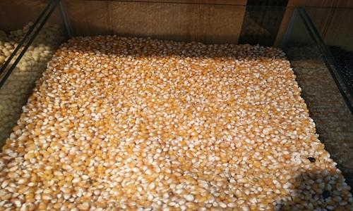 多国面临粮食危机 我国的粮食安全问题怎么样?