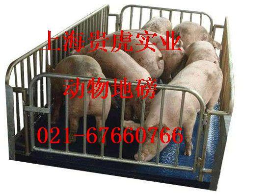 畜牧平台称5吨,畜牧台称三吨