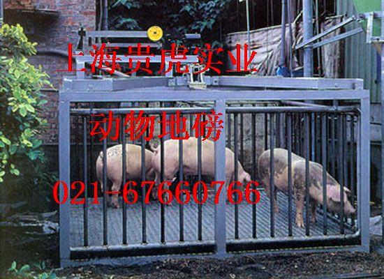 五吨称猪电子磅,称猪地称